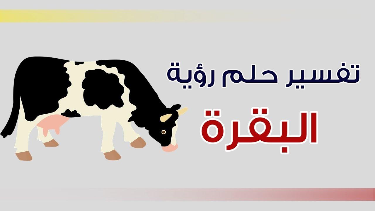 صورة تفسير الاحلام بقرة , معنى رؤية البقرة في المنام