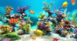 صورة انواع الحيوانات البحرية , البحر وعجائبه التي تبهر