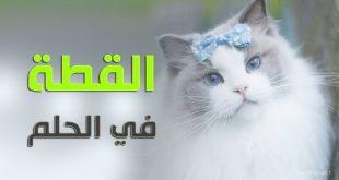 صورة تفسير حلم القطه تعضني , ما معنى حلم عض القطة
