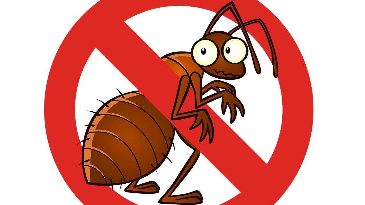 صورة شركة مكافحة حشرات بالقاهرة , لا حشرات بعد اليوم