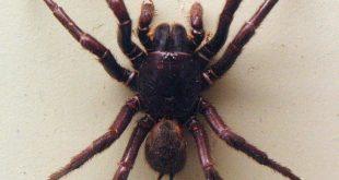 صورة تفسير احلام العنكبوت الاسود , تفسير لدغة العنكبوت في المنام