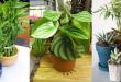 صورة افضل نباتات الزينة المنزلية , زيني بيتك مع افضل نباتات الزينة
