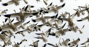 صورة كيف اجعل طيور الحب تبيض , أقوي الطرق المجربه علميا و الاسهل علي الاطلاق