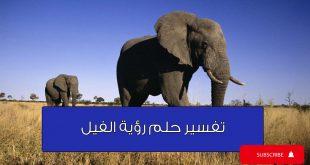 صورة تفسير رؤية الفيل في المنام ، رأيت الفيل في منامي ما معني ذلك