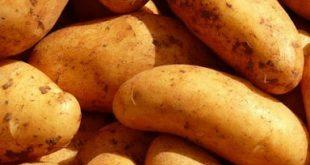 صورة تعالي نعرف مع بعض تفسير حلم البطاطا , تفسير البطاطا في الحلم